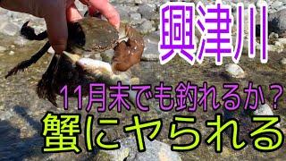 【興津川】11月末でも釣れるのか?? オトリ即死w