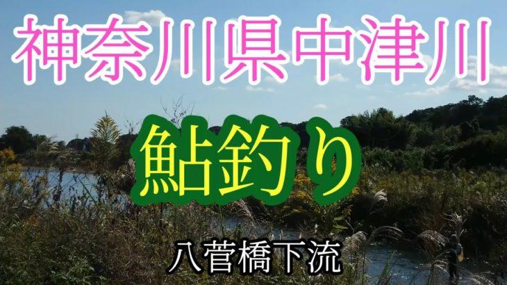 【初心者のアユ釣り日誌】神奈川県中津川#20