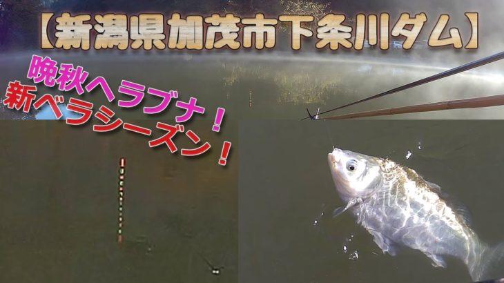 ヘラブナ釣り【下条川ダム(2020/11/15)】新潟県加茂市、晩秋の野釣りHITシーン13連発、タナ2m~最終1m、8尺短竿、チョーチン気味から初めて昼前には浅いタナで釣っていました!クワセは力玉