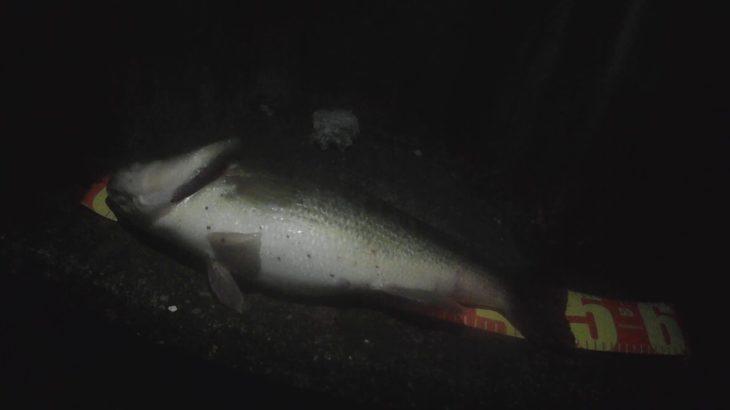 ブラックバス 惜しい❗️50UP釣れた後に49センチ