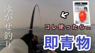 仕掛けを変えたら堤防から良型青物が釣れました【泳がせ釣り】【堤防釣り】(Day-42)