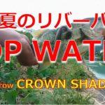【ブラックバス】FishArrow CROWN SHAD5.5 × AbuGarcia Hornet Stinger HSC-682MH × SHIMANO scorpion Metanium XT