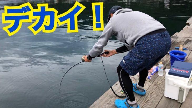 筏の釣り公園でフカセ釣りしてみたら… Fishing Battle GIANT fish.