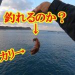 【石鯛釣り】和歌山県串本大島 しょらさん渡船 すべりの磯に挑戦‼