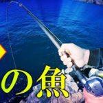 【幻の魚を求めて】和歌山県那智勝浦・フリースタイルの磯釣りで超高級魚を狙います【つりとんチャンネル】