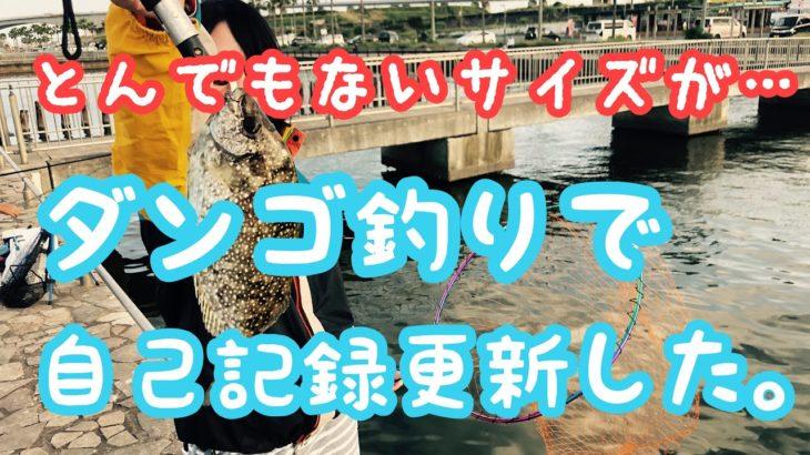 見た事もないくらいデカいアイツが釣れた!そして、突然沸き起こるナブラにルアーをキャストしたらまさかの…【浜名湖】【新居海釣り公園】【紀州釣り】