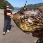海釣りしたら、とんでもない魚が釣れたっ!!!