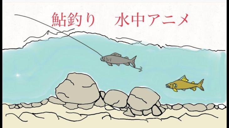 鮎釣り 友釣り水中動画 アニメ