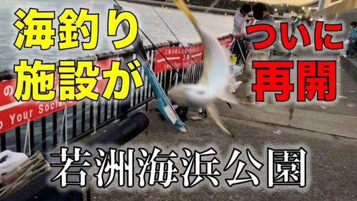 若洲海浜公園 海釣り施設堤防がついに開放!釣査結果はいかに!?