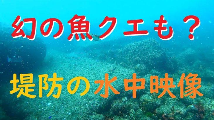 幻の魚クエも?堤防まわりは魚の楽園だった!水中映像