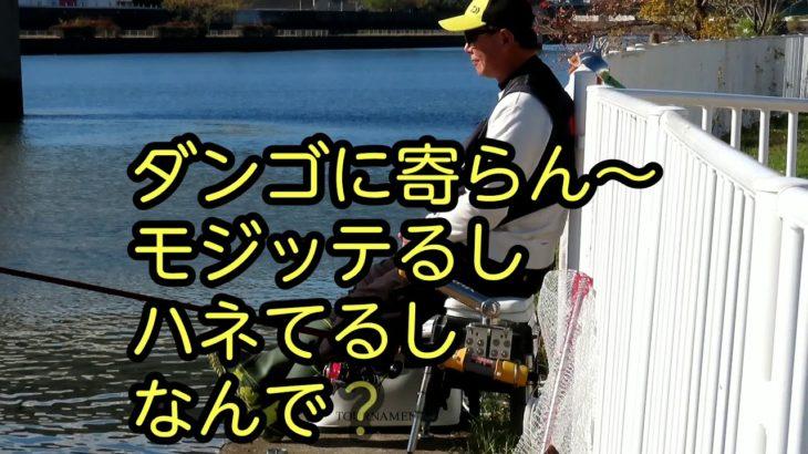 鯉の紀州釣り・神崎川 西日本野鯉会親睦大会中