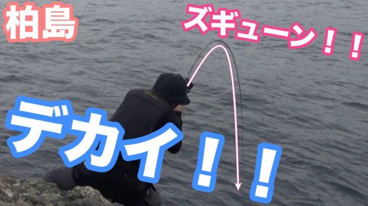 大型尾長グレゲット!磯釣り豪快ファイト連発!!勝つのは人か!?魚か!?(前編)