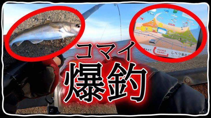 【投げ釣り】コマイや大マイを爆釣してしまう!【北海道 釣り】