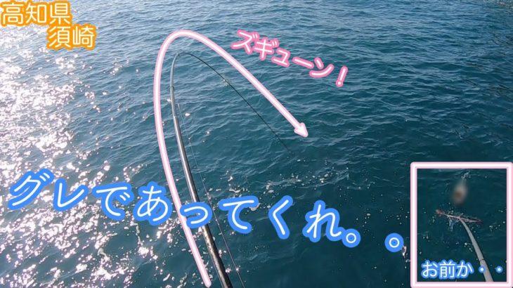 グレはいっぱい釣れるけど・・高知県須崎で磯釣り!!