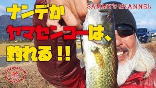 ナンデかヤマセンコーは釣れるよね!!【五三川】