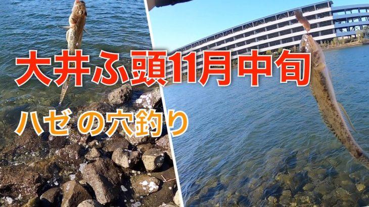 【大井ふ頭】ハゼの穴釣り【釣りvlog】2020/11/23
