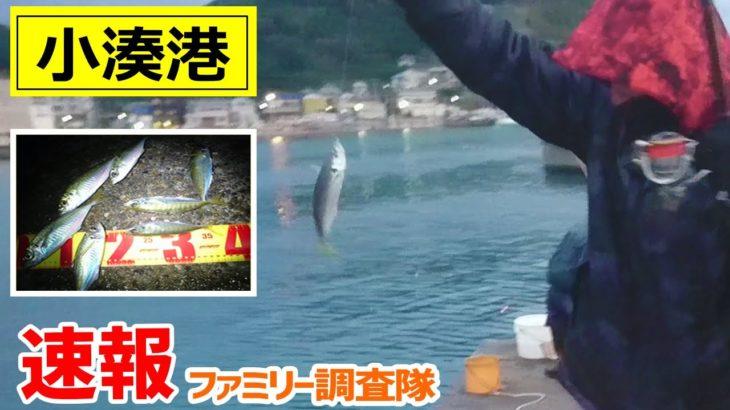 【小湊港】アジ釣り速報! 2020年11月29日 ~さかきゅうファミリー調査隊~