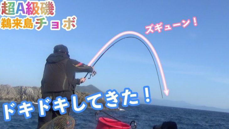 巨大尾長グレを狙え!鵜来島の超A級磯チョボで磯釣り!!
