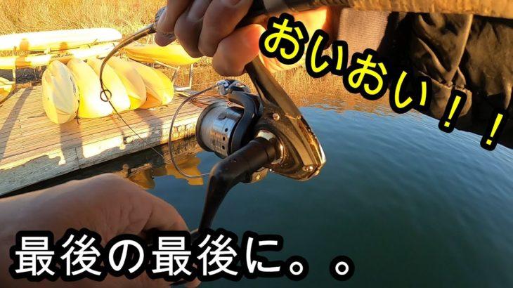 [晩秋バス釣り]最後の悪あがきでシャッドテール付けたジグヘッドを足元に落としてみたらデカイのが食ってきた。(ケイテック イージーシャイナー)(keitech easy shiner) レイクカシータス