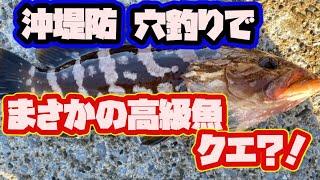 【沖堤防】穴釣りでまさかのクエ!