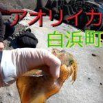 和歌山県白浜町の地磯でヤエン釣りやってみた。後半