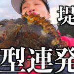 簡単な釣り方で冬の堤防から良型のアラカブが連発!【初心者オススメ】