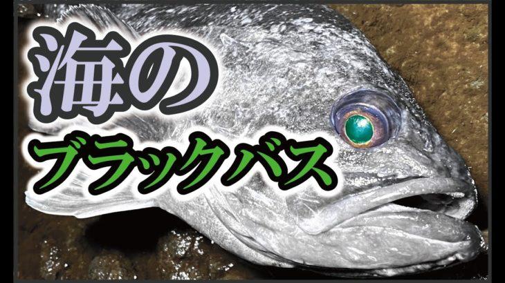 【バス釣りワーム】海のブラックバスという名のデカソイを狙う!