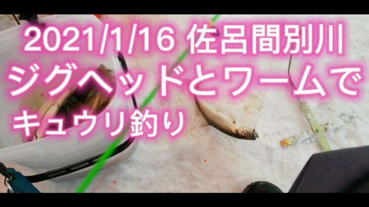 2021年1月16日佐呂間別川キュウリ釣り