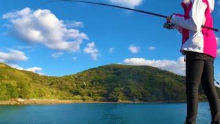 これから旬のあの魚が釣りたい【堤防釣り】【泳がせ釣り】(Day-39)