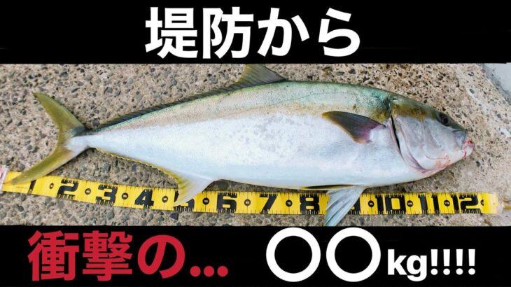 堤防から夢だったメーターオーバーヒラマサが釣れました【泳がせ釣り】【堤防釣り】(Day-41)
