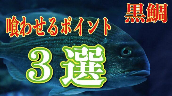 必ず釣りたい。【碧南温排水】磯竿+◯◯=黒鯛orキビレ ※買い忘れ厳禁