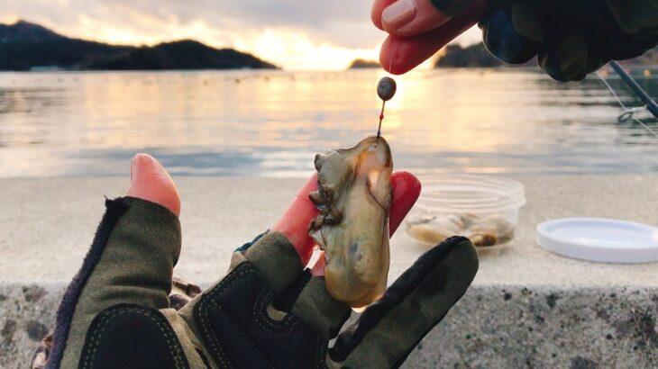 牡蠣を餌にして堤防へ落とすと釣れる魚とは・・・