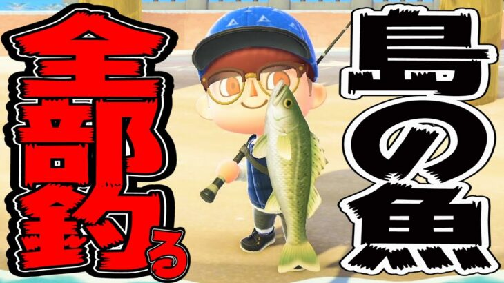 【あつ森】釣ってない魚コンプリート目指す!金の釣り竿がほしいんじゃあ!※概要欄要確認【生放送】