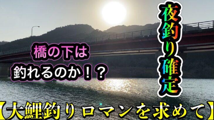 【大鯉鯉釣りロマンを求めて】橋の下で大鯉は釣れるのか!?ボウズ脱出か!?【夜釣り確定】