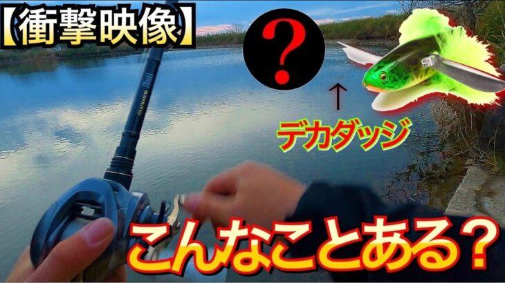衝撃映像‼️デカダッジが上空から狙われた!!【佐賀バス釣り】【ボツです】