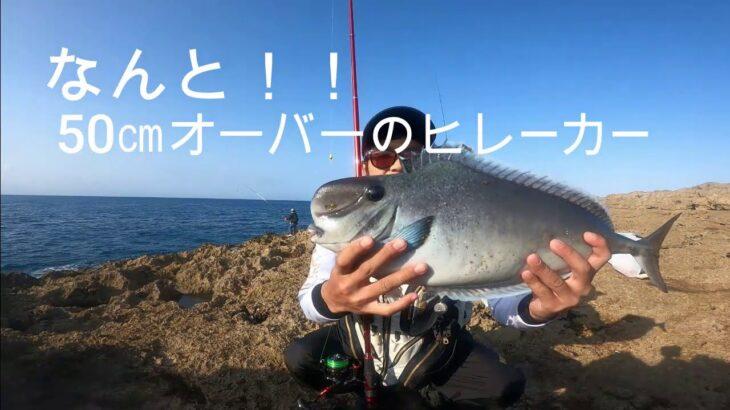 初のポイントで、とんでもない魚を釣り上げた!! 荒崎海岸編