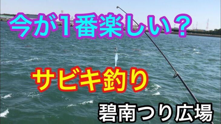 今が1番楽しい?サビキ釣り 碧南つり広場 海釣り公園
