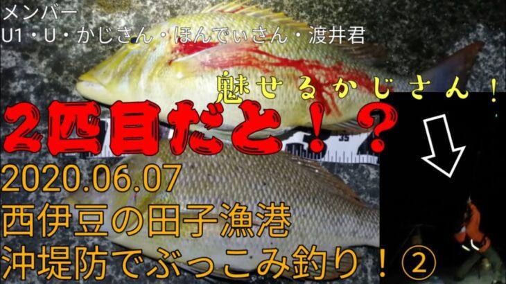 西伊豆の田子港沖堤防でぶっこみ釣り!楽しすぎて情報過多!2/2(2020.06.07)