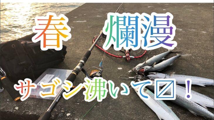 春シーズン開幕!サゴシラッシュ ジギング 石川 内灘 海釣り公園 マヅメ 短時間 ソロ