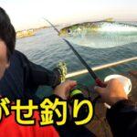 海釣り公園で泳がせ釣り!