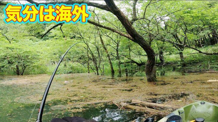 こんな景色で釣りができるカヤック最高!!