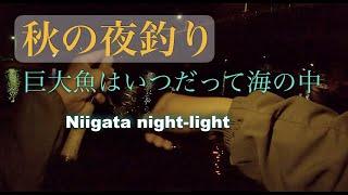 【新潟夜釣り】渓流ロッドでライトゲーム楽しんでたら規格外の魚が掛かって泣いた夜【night light】