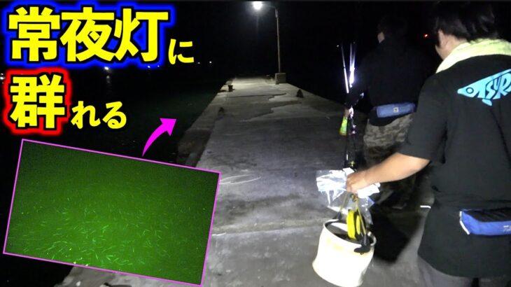離島の常夜灯下の魚群が凄まじかった!!