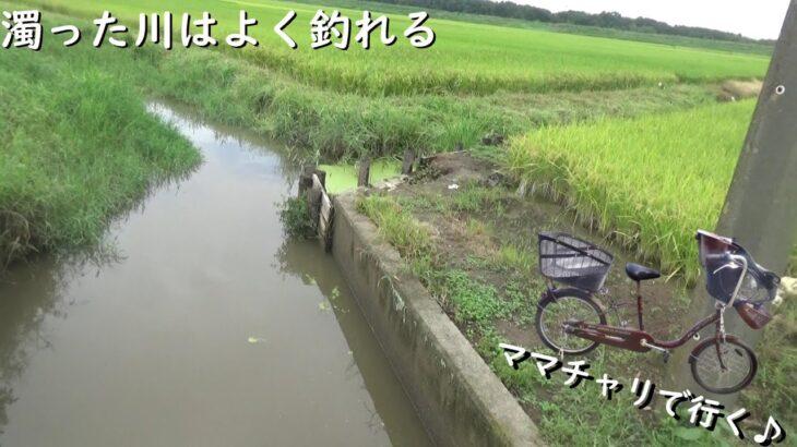 こんな感じの濁った川で釣り