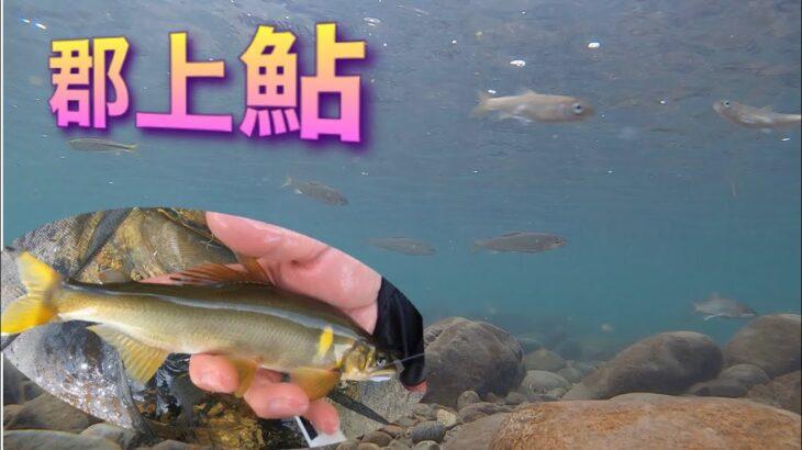 終盤の郡上鮎釣り、空撮や水中で鮎の撮影