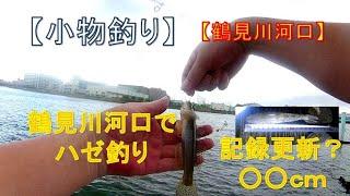【小物釣り】【鶴見川】鶴見川河口の水門前で記録更新?