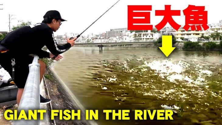 ドブ川で暴れる巨大魚を捕獲する方法 | How to catch a Giant Fish in muddy river in the city【KT】