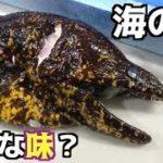 凶悪顔の魚ウツボを食べてみた!!