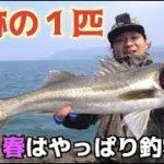堤防から春は釣れる魚が沢山!!