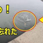 【綾瀬川で早春フナをヘチ釣り】重いっ!竿がヤバい!凄いヤツが来た!